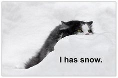 Funny cat pic     . Awesome Pic! I saw more hilarious stuff here: http://oraclevid.blogspot.com