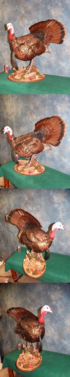 Birds 71123: New Wild Turkey Taxidermy Trophy Bird Mount Hunting Cabin Decor -> BUY IT NOW ONLY: $595 on eBay!