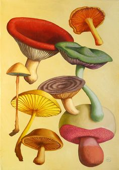 Official website for Martin Kingdom, a London-based artist and illustrator. His illustrations have been featured in a number of publications and films. Nature Illustration, Botanical Illustration, Botanical Drawings, Botanical Prints, Mushroom Art, Graphic Art, Art Photography, Flora, Stuffed Mushrooms