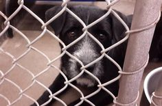 SAFE --- Terrier male 3-5 years old  Kennel A25 Available NOW**** $51 to adopt   Located at Odessa, Texas Animal Control.  https://www.facebook.com/speakingupforthosewhocant/photos/pb.248355401855372.-2207520000.1412712932./853357821355124/?type=3&theater