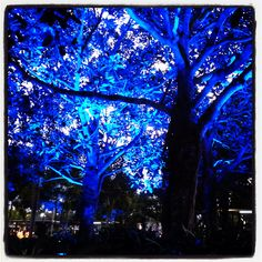 Cairns, Queensland. Cool illuminated trees at night, near the esplanade pool.