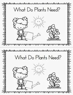 I just finished my plant mini unit. This unit focuses on the plant life cycle, plant needs, plant parts, and how to grow a plant. Kindergarten Science, Prek Literacy, Kindergarten Freebies, Preschool Learning Activities, Writing Activities, Plant Lessons, Teaching Plants, Preschool Garden, Plant Crafts