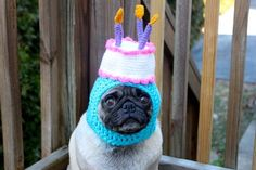 Let's not forget Pickles the Etsy-modeling pug.