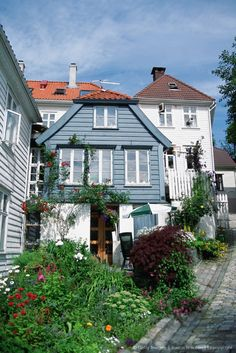Garden in front of wooden houses, Bergen, Norway