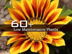 60   Low Maintenance Plants