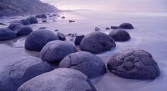 The Moeraki Boulders are a big attraction for all tourists visiting New Zealand! Moeraki Boulders, What's New Today, Visit New Zealand, Cheap Cars, Car Rental, Rare Photos, Amazing Nature, Bouldering, Earth