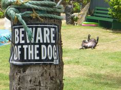 """""""Very Scary"""" Dogs Spotted Behind 'Beware Of Dog' Signs Funny Animal Pictures, Funny Animals, Cute Animals, Animal Funnies, Random Pictures, Scary Dogs, Funny Dogs, American Pit Bull Terrier, Very Cute Dogs"""