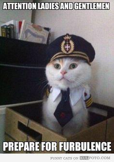 Funny cat: Ladies and gentlemen prepare for furbulence