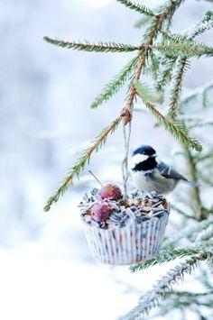 Homemade Bird Feeders, Diy Bird Feeder, Winter Christmas, Christmas Crafts, Holiday, Lush, Bird Seed Ornaments, Fleurs Diy, Backyard Birds