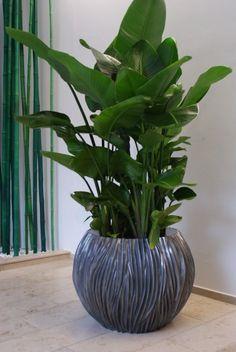 feng shui pflanzen f r harmonie und positive energie im wohnraum feng shui zimmerpflanzen und. Black Bedroom Furniture Sets. Home Design Ideas