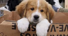 Google 2016: Οι 10 πιο συχνές ερωτήσεις για το σκύλο !