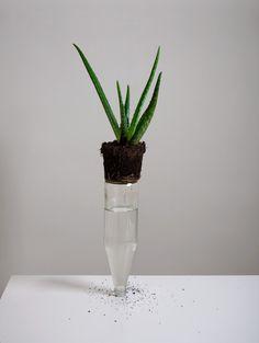 Plant on bottle by Csilla Klenyánszki