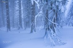 Whiteout - Tarcu mountains under a heavy snow storm.