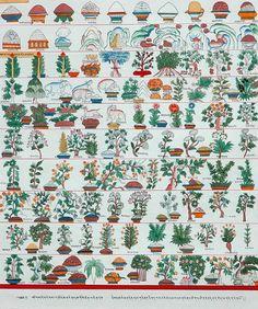 Tibetan Thangka painting depicting medicinal herbs via http://dreamssoreal.tumblr.com/post/76170558912/good4youherbals-tibetan-thangka-painting