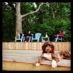 Portuguese Water Dog, Deck, Instagram Posts, Summer, Animals, Outdoor, Animais, Outdoors, Animales