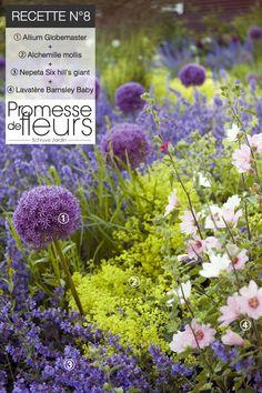 Next springs garden? Back Gardens, Outdoor Gardens, Allium Globemaster, Vegetable Garden, Garden Plants, White Gardens, Colorful Garden, Gardening For Beginners, Garden Styles