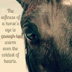 Beautiful - Horses Funny - Funny Horse Meme - - Beautiful Horses Funny Funny Horse Meme Horses do wonders for the soul. The post Beautiful appeared first on Gag Dad. The post Beautiful appeared first on Gag Dad. Pretty Horses, Beautiful Horses, Animals Beautiful, Beautiful Eyes, Beautiful Creatures, Equine Quotes, Equestrian Quotes, Equestrian Problems, Inspirational Horse Quotes