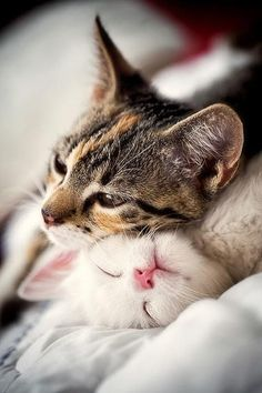 Adorable cute cats sweet snuggles.... click on pic to see more