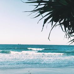...Crinkly palms ...messy ocean ...calm happy thoughts ... arvo walks ... by lucianarose