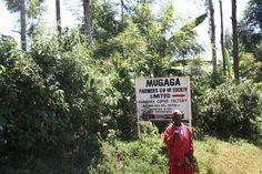 Mugaga Coop Society   Flickr - Photo Sharing!