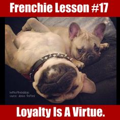 Frenchie Lesson 17, French Bulldogs