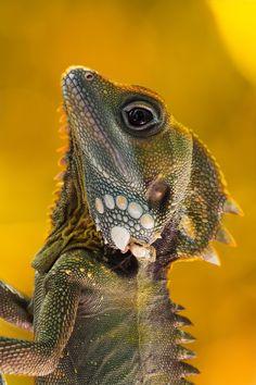 Lizard 1 by Daniel Wehnert / 500px