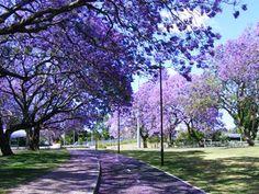 purple trees...lol my version of heaven! lol