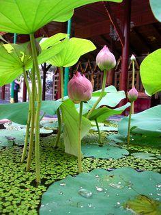 Water garden Grand palace, Bangkok, Thailand