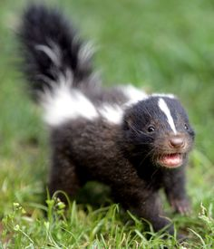 skunks are so pretty