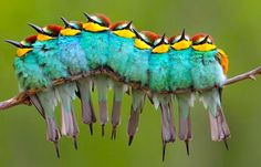 Thought this was a caterpillar for a split second...awesome.