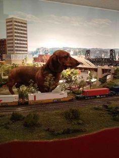 And the dachshunds shall rule the world!!!