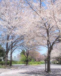 甘い春の散歩