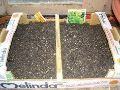 L'Orto di Grem: Come costruire un semenzaio