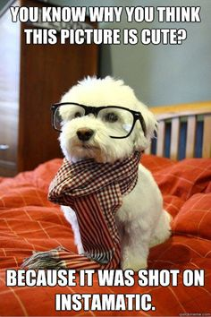 The Best Of Hipster Dog