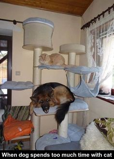 When dog spends too much time with cat... funny pics, funny gifs, funny videos, funny memes, funny jokes. LOL Pics app is for iOS, Android, iPhone, iPod, iPad, Tablet