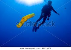 stock photo Greg Amptman: A yellow phase trumpet fish leaving a diver to ascend back into his world