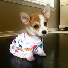 Small Pembroke Welsh Corgi Puppies Grooming Colorful Dinosaur Dog Pajamas Source by The post Colorful Dinosaur Dog Pajamas appeared first on Jim Norman Dogs. Cute Funny Animals, Cute Baby Animals, Animals And Pets, Nature Animals, Puppies In Pajamas, Cute Dogs And Puppies, Funny Puppies, Corgi Funny, Cute Corgi Puppy