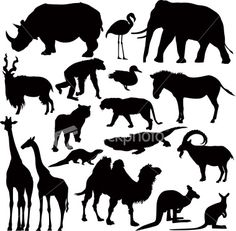 Zoo Animal Silhouettes Royalty Free Stock Vector Art Illustration