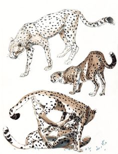 Amazing Animal study by Tiffany Prothero.
