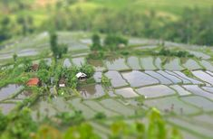 Paisajes agrícolas