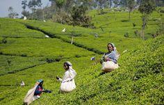 Amazing Experiences In Sri Lanka