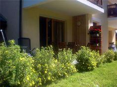 Our garden and terrace Terrace, Garden, Plants, Photos, Green Houses, Balcony, Garten, Pictures, Patio