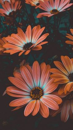 Marvelous Flower Wallpaper for any Sytle Your new iPhone wallpaper … – iPhone Wallpapers Wallpaper Flower, Sunflower Wallpaper, Flower Backgrounds, Wallpaper Backgrounds, Orange Wallpaper, Screen Wallpaper, Calming Backgrounds, Vintage Phone Wallpaper, Iphone Background Vintage