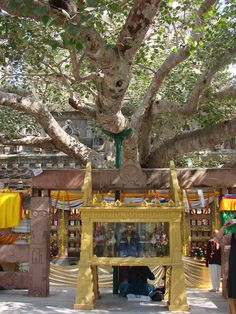 the Bodhi tree under which Buddha got his enlightenment and the Vajrasan, the place where he sat and meditated. The present tree is the fifth generation of the original tree that was brought back to Bodhagaya from Anuradhapura in Sri Lanka.