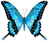 Clipart - vecteur, illustration, de, beau, vert bleu, papillon, isolé, blanc, fond k9232699 - Recherchez des Cliparts, des Illustrations, des Dessins et des Images Vectorisées au Format EPS - k9232699.eps