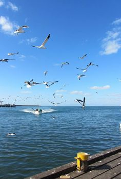 MINE ALL MINE - As the boats come in the birds descend!  #harbour #boats #fishing#birds #seagulls #westcoast #southafrica Beach Tops, West Coast, South Africa, Boats, Fishing, City, Nature, Travel, Sup Fishing