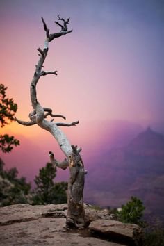 lanatura:\u000a\u000a\u000a\u000a Dead Standing Tree at the Grand Canyon (by Jerry Lindholm)