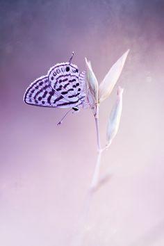 Photograph Untitled by mehmet karaca on 500px