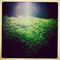 """@pocketstock's photo: """"Green"""""""