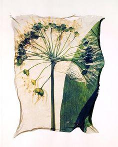 'Flowerpress' pictures uses polaroid lifts, a technique that Paul Williams won an award in the Polaroid European Photographer Awards.